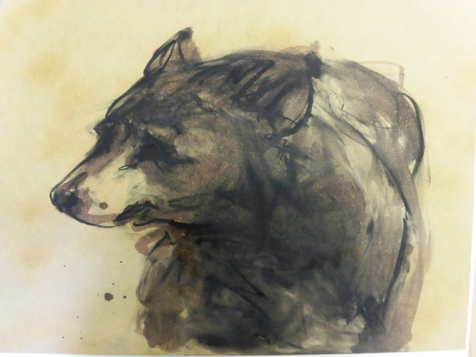 Drawings. Bear. 2014